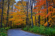 Indiana Autumn Prints - Cool Creek Park in Fall Print by Amy Lucid