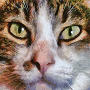 New Ideas Paintings - Cool for Cats  by Tracey Harrington-Simpson