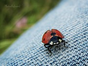 Ladybeetle Photos - Cool Jeans by Jamie Johnson