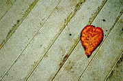 Fallen Leaf Photo Originals - Cool Leaf by Marc Levine