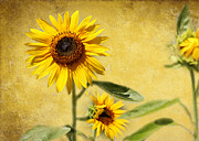 Colorful Contemporary Art - Cool Sunflowers by Sabrina L Ryan