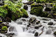 Wahkeena Prints - Cool Waters Print by Suzanne Luft