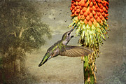 Hummingbirds Framed Prints - Cooler Down Here? Framed Print by Donna Kennedy