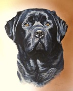 Labrador Paintings - Cooper by Julian Wheat