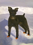Miniature Schnauzer Paintings - Cooper by Sara Davenport