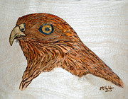 Ink Pyrography Framed Prints - Coopers Hawk Framed Print by Mike Holder