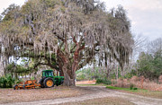 Lowcountry Prints - Coosaw Cross Roads with Live Oak Print by Scott Hansen