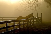 Winter Scenes Rural Scenes Posters - Coosaw Early Morning Mist Poster by Scott Hansen