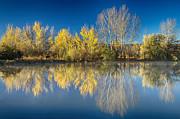 James BO  Insogna - Coot Lake Autumn Reflections