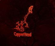 Copperhead Print by Rosemarie E Seppala