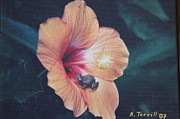 Fauna Originals - Coqui  by Alice Terrill