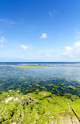 Coral Beach Bali In Clear Morning Weather Print by Hakai Matsu