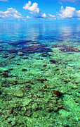 Jenny Rainbow Art Photography Prints - Coral Reef Near the Island at Peaceful Day. Maldives Print by Jenny Rainbow