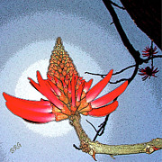 Stylized Photography Posters - Coral Tree Poster by Ben and Raisa Gertsberg