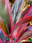 Cordyline Framed Prints - Cordyline Leaf Detail Framed Print by Caroline Street