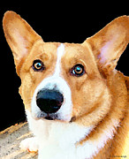 Corgi Posters - Corgi Art - Pensive  Poster by Sharon Cummings