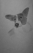 Corgi Drawings - Corgi by Image Source