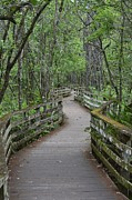 Amber Bobbitt - Corkscrew Boardwalk