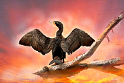 Diana Haronis Prints - Cormorant At Sunset Print by Diana Haronis