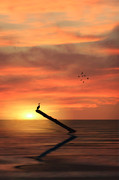 Sunset Seascape Framed Prints - Cormorant In The Sunset Framed Print by Tom York