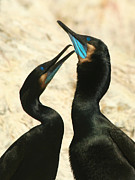 Bob and Jan Shriner - Cormorant Love
