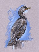 Sea Birds Pastels Framed Prints - Cormorant Framed Print by MM Anderson