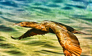 Cormorant On The Move Print by Deborah Benoit