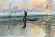 Florida Pond Prints - Cormorant Swim Print by Deborah Benoit