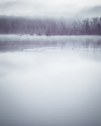 Lisa McStamp - Cormorants in Winter Fog