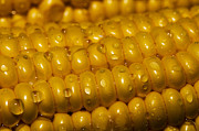 Corn Photos - Corn by Arisha Singh