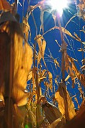 Corn Print by Todd and candice Dailey