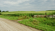 Dirt Roads Photos - Corn Clouds Sun Rusty Gate by Wilma  Birdwell