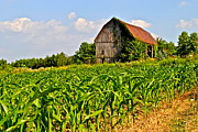 Abode Prints - Corn Farm Print by Robert Harmon