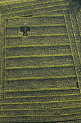 Agronomy Photos - Corn Field, Chavagnes En Paillers by Laurent Salomon