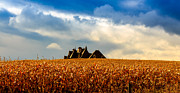 Cornfield Photos - Corn field by Tibor Co