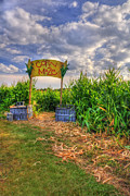 New Hampshire - Corn Maze by Joann Vitali
