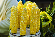 Sweet Corn Farm Prints - Corn on Display Print by Christi Kraft