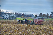 Amish Farmer Photos - Corn Picker Nov 2013 Color by David Arment