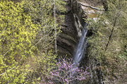 Red Bud Trees Posters - Cornelius Falls from Overlook - Heber Springs Arkansas Poster by Jason Politte