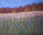 Cornfield Originals - Cornfield and Maples by Suzanne McKay