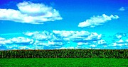 Amish Farms Prints - Cornfield Print by Annie Zeno