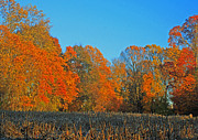 Photos Of Autumn Prints - Cornfield Colors Print by Todd Breitling
