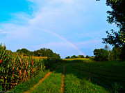 Cornfield Photos - Cornfield Rainbow 2 by Nick Kirby