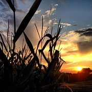 Cornfield Photos - Cornfield Sundown by Angela Rath