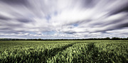 Cornfield Photos - Cornfields in the wind by Ian Hufton