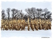 Veronica Batterson - Cornstalks in Snow