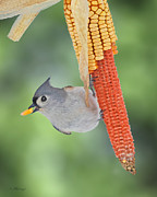 Titmouse Photo Originals - Cornthief by Larry  Downey