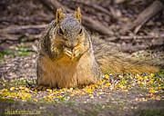 LeeAnn McLaneGoetz McLaneGoetzStudioLLCcom - Corny Squirrel