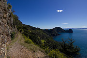 Tramping Framed Prints - Coromandel Walkway Framed Print by Zachary Menchini