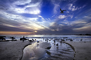 Seagull Photo Prints - Corona del Mar Print by Sean Foster